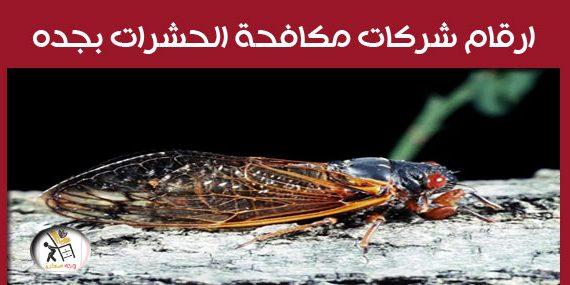 ارقام شركات مكافحة الحشرات بجدة