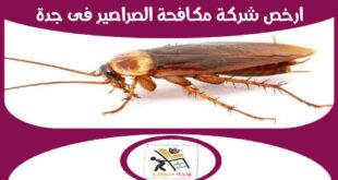 ارخص شركة مكافحة الصراصير فى جدة