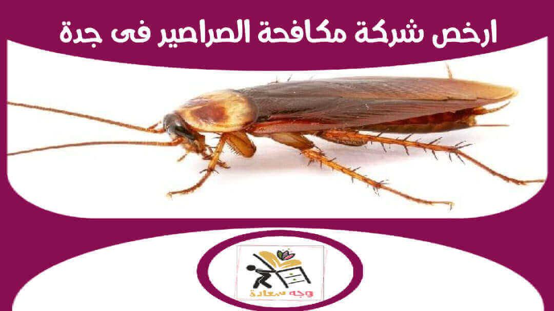 شركة مكافحة الصراصير بجدة رش صراصير بالضمان