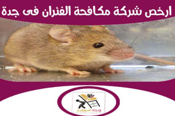 ارخص شركة مكافحة الفئران فى جدة
