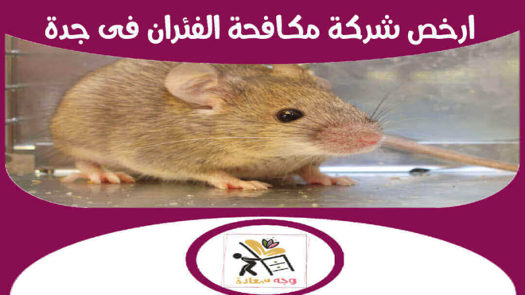 شركة مكافحة الفئران بجدة بدون مغادرة المنزل
