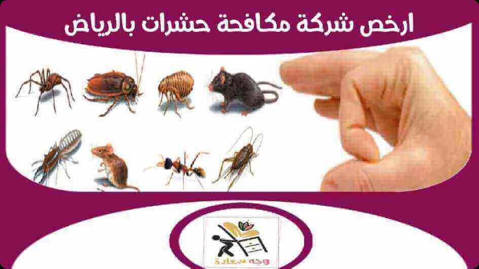 ارخص شركة مكافحة حشرات بالرياض للايجار