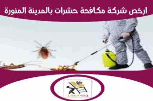ارخص شركة مكافحة حشرات بالمدينة المنورة